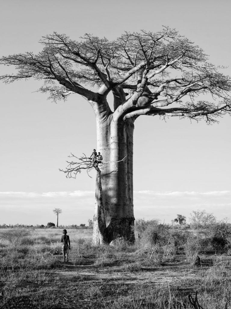 Série-Baobabs-A-l'affût--Pierrot-Men-Galerie-21