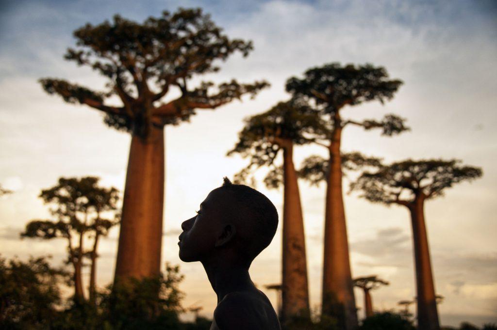 Série-Baobabs-Au-pied-des-géants--Pierrot-Men-Galerie-21