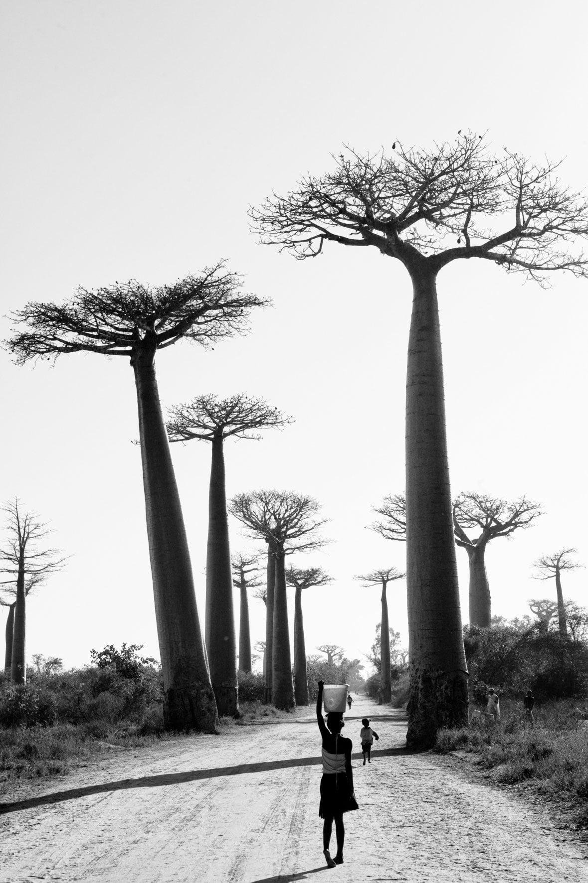 Série-Baobabs-En-avant-Pierrot-Men-Galerie-21
